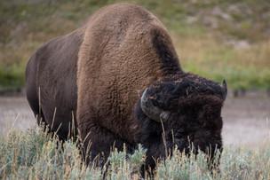 Yellowstone 08-2019-33.jpg