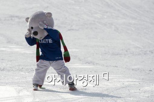 스키에이트 타는 북극곰