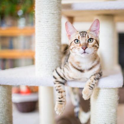 cat on tower good exercise behavior