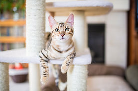 Empire Pet Care About Us Pet Sitting Cat on Cat Tree