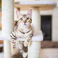 tabby cat resting