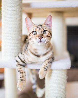 Chat visite à domicile