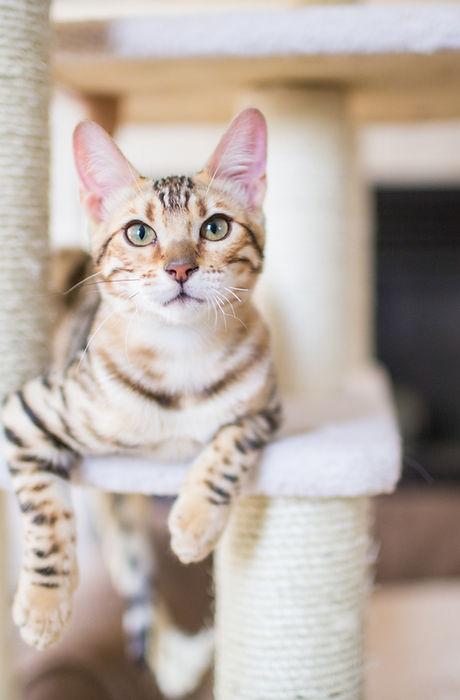 hunterdon county cat sitter