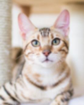 Cat at Veternary Hospital