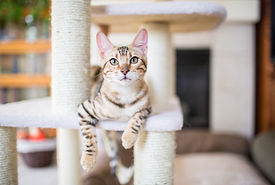 Cat on scratching post-CuddleCare PSS