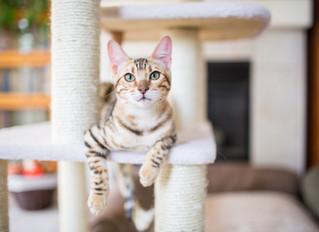 Abwechslung ist nicht für die Katz': Tipps für ein ausgelastetes Katzenleben