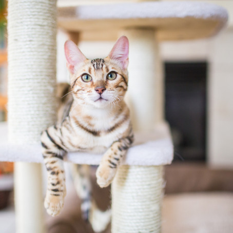 Anti-Declawing Bill Makes its Way Through NY State Assembly