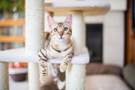 chat en visite à domicile