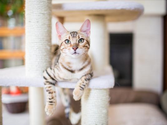 Un nou membru în familie - pisica