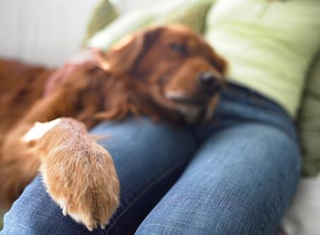 Вывих коленной чашечки у собак
