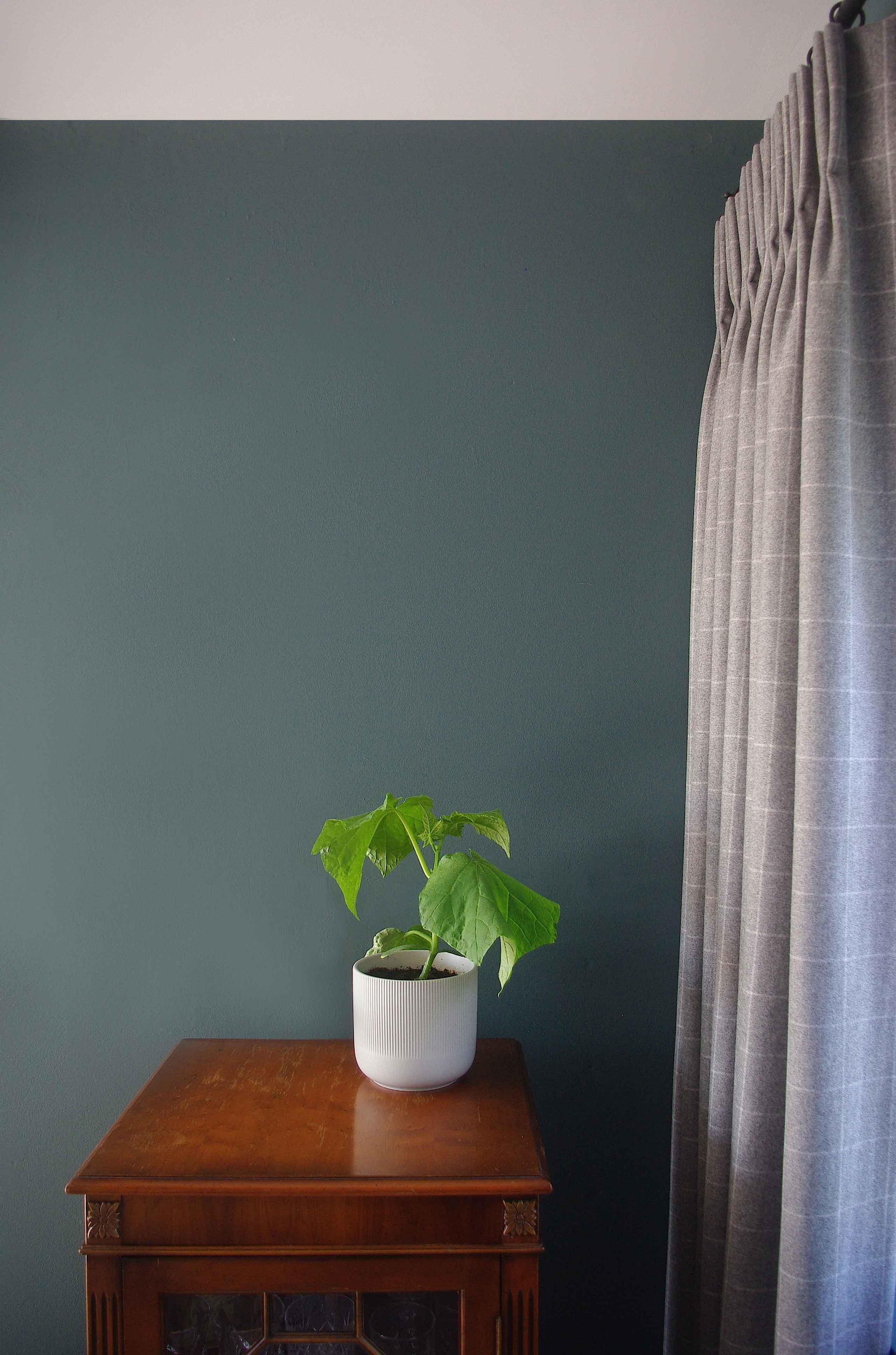 Living-Room-Plant