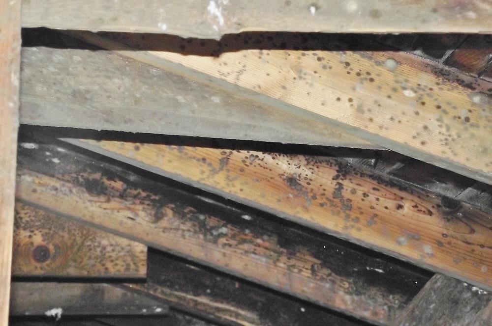 Présence de moisissures généralisées sur la structure du toit.