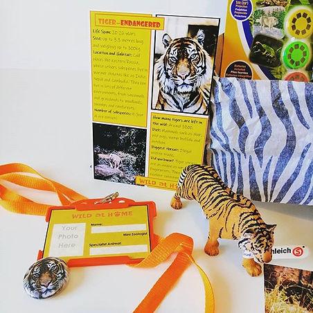 tiger model.jpg
