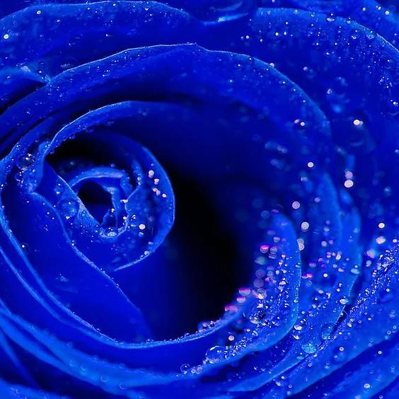 Blu Rose Art Bistro