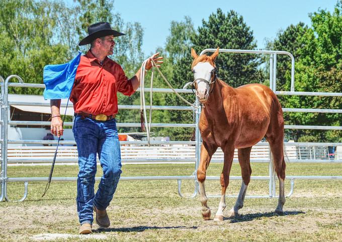 Horseman Bernd Hackl Pferd International