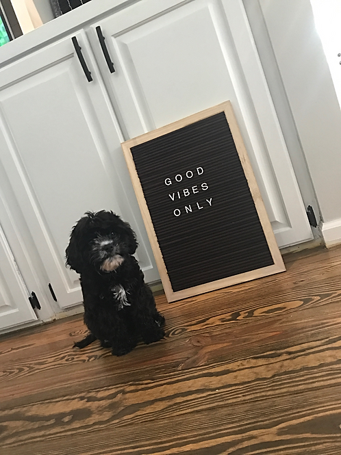 13.5 x 19.5 Modern Letterboard, brown felt (Puppy not included)
