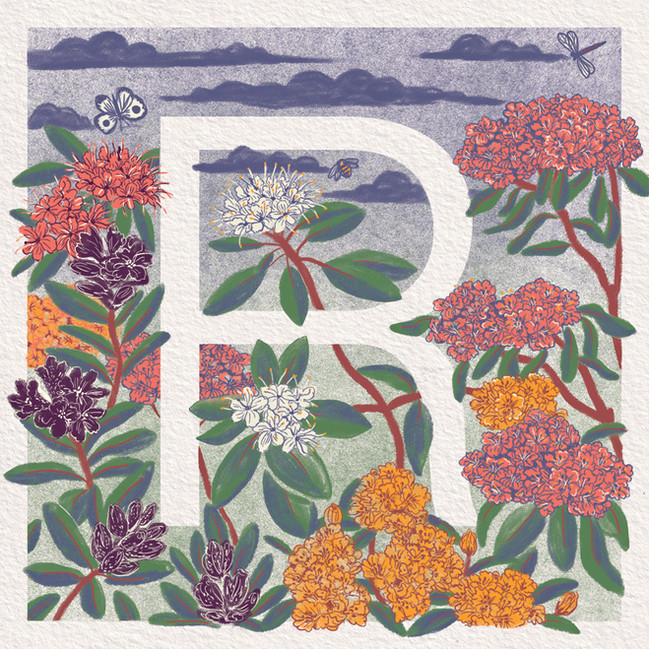R is for Rhododendron