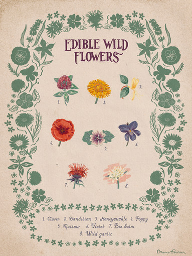 Edible Wild Flowers