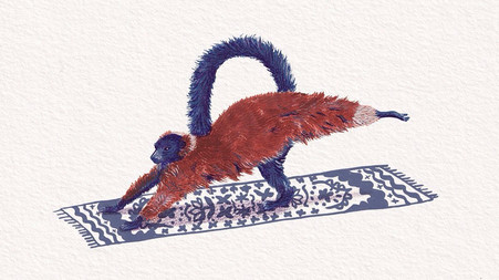 Lemur Plank