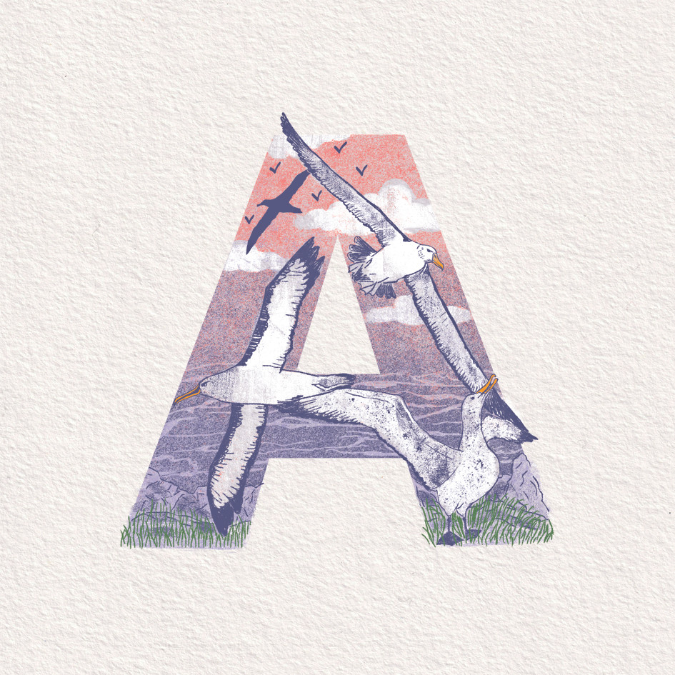 A is for Albatross