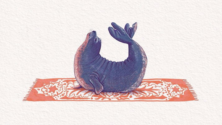 Seal Bow