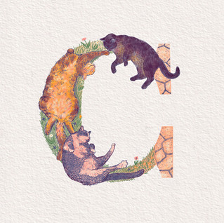 C is for Cats