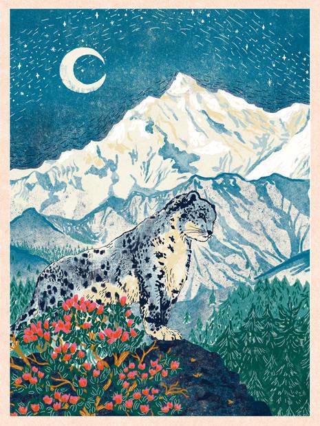 Snow Leopard's Himalayans