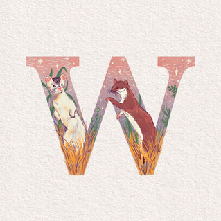 W is for Weasel