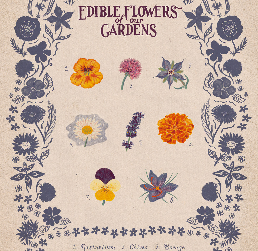 Edible Flowers of our Gardens