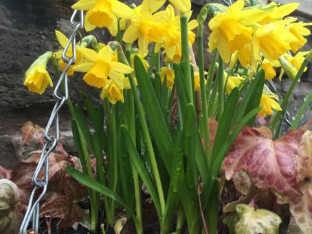 イギリスにも春が来ました。