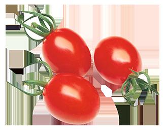 Tomate cerise Cœur de Pigeon cultivées sans pesticides (642)