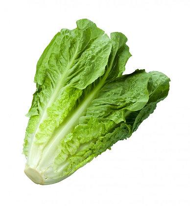 Salade ROMAINE (906)
