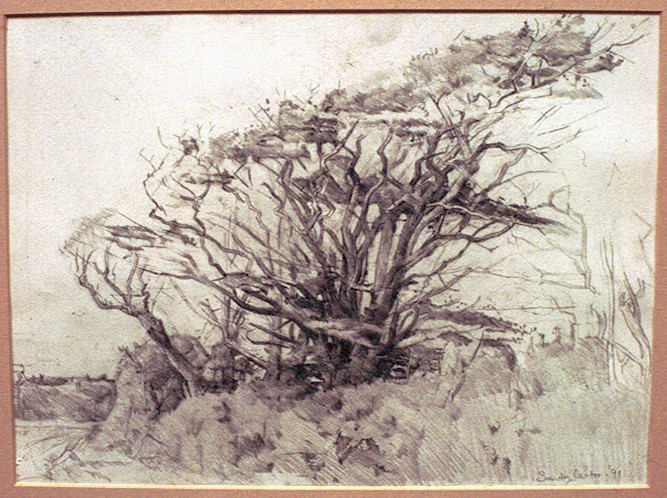 Pencil on Paper.Trees Port Isaac.