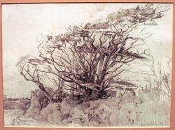 Trees Port Isaac.
