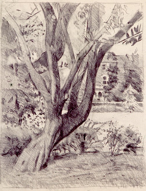 Pencil on Paper .Tree Victoria Park.