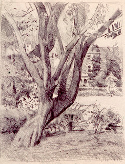 Tree Victoria Park.