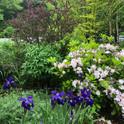 Perennials, trees, and shrubs