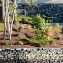 Waterside planting design