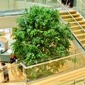 Interior landscaping