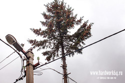 saratovskie arboristi alpinisti (21).jpg
