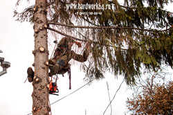saratovskie arboristi alpinisti (10).jpg