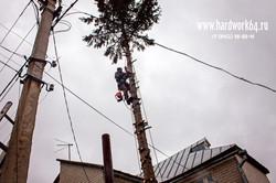 saratovskie arboristi alpinisti (27).jpg