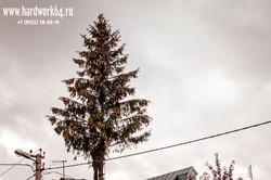 saratovskie arboristi alpinisti (16).jpg