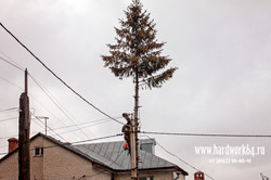saratovskie arboristi alpinisti (22).jpg
