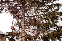 saratovskie arboristi alpinisti (7).jpg