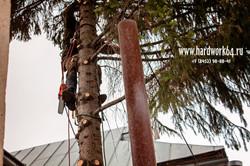 saratovskie arboristi alpinisti (12).jpg