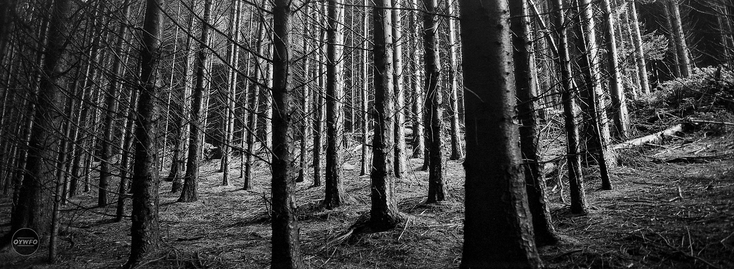 Shot with Hasselblad Xpan on Fomapan 400 film