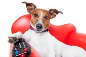 dogTV.jpg