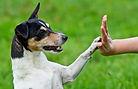 dog-training-300x193.jpg