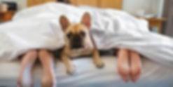 Dog sleeps in bed